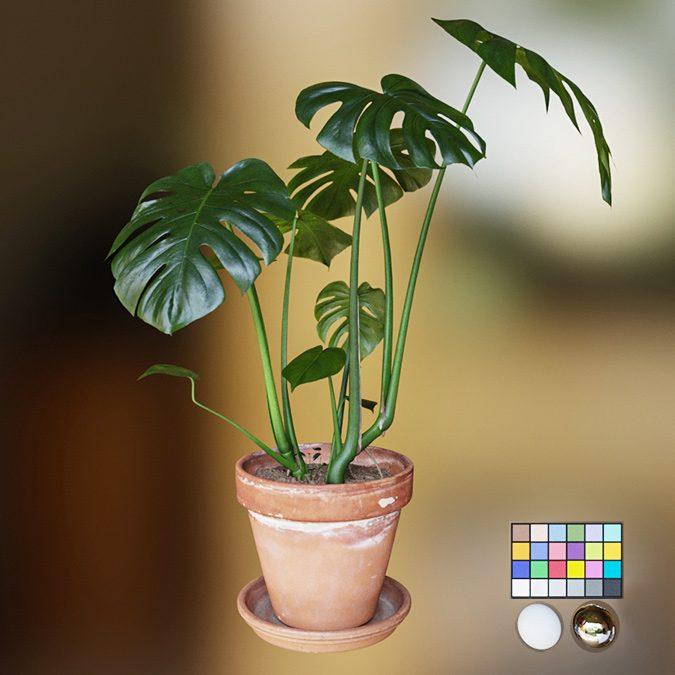 Vray 5.1 Materiales de vegetación con Thin Walled y SSS
