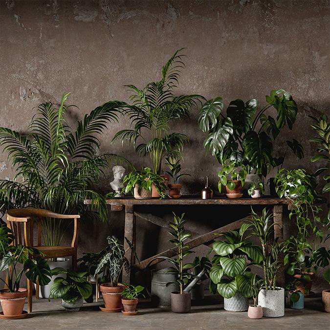 Descubre el NUEVO Pack de plantas 3D escaneadas