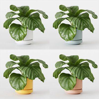 3D Studio Custom Attributes – Controlar suciedad en plantas
